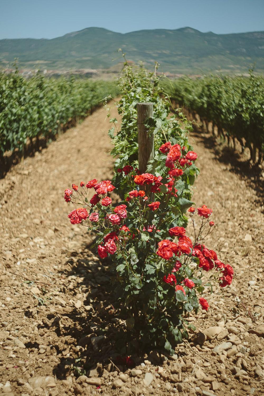 013-vineyard-road-trip-to-spain