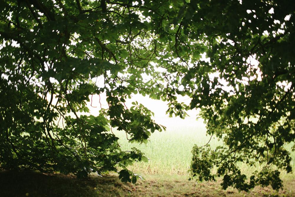 Kazu foto Riga