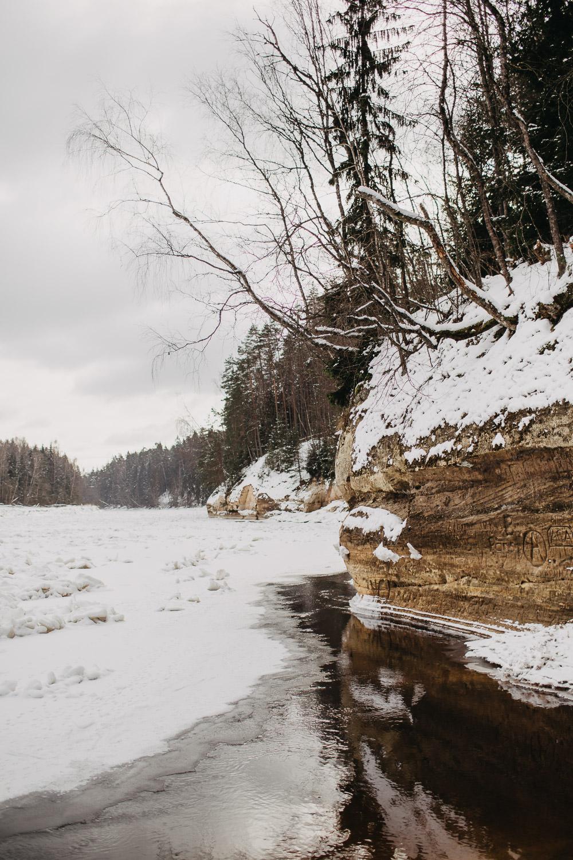 Sietiņiezis ziemā