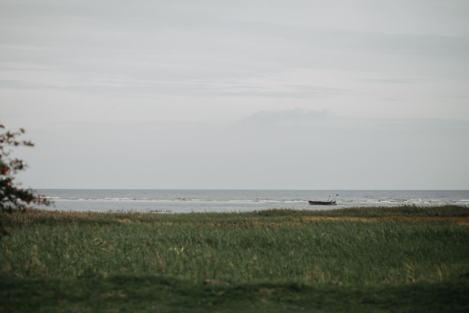 Mazā kaija pie Jūras